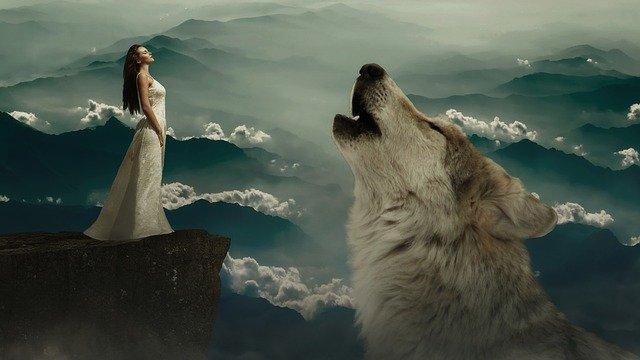 wolf 3678069 640
